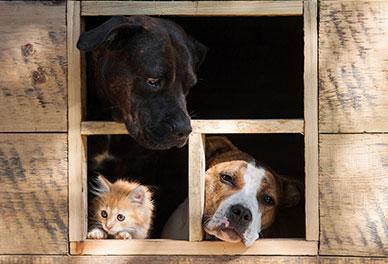 Freshfields Animal Rescue |