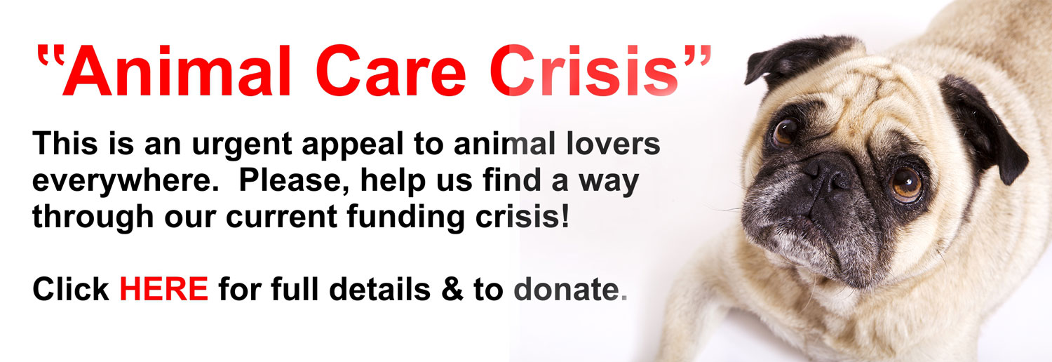 Freshfields Animal Rescue |