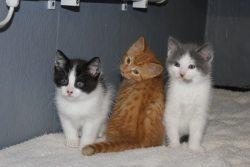 Cutie_Kittens_(1)_(600_x_400)_250_167