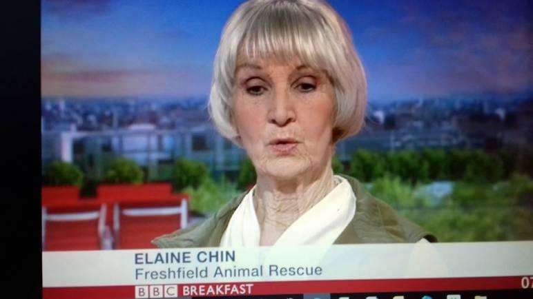 Freshfields Speaks Up for Abused Animals