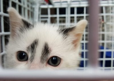 Kitten Feb 20