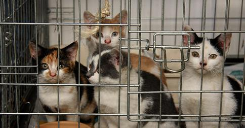 Wales cats needing homes