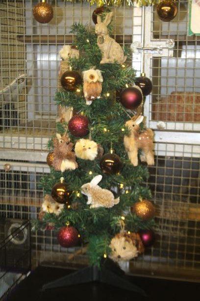 Wildlife this Christmas