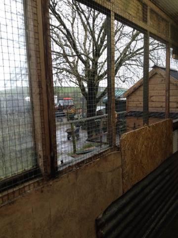 Storm Doris hits the Shelter.